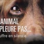 Derrière le steak et le mascara du supermarché…la souffrance animale