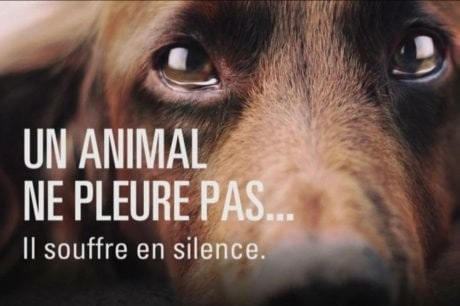 Souffrance animale