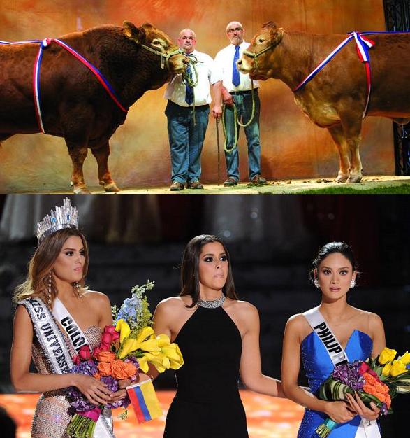 Miss France est-elle une grosse vache ?