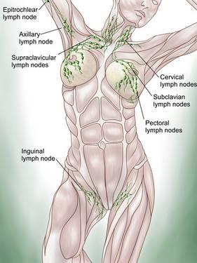 Système lymhatique superficiel